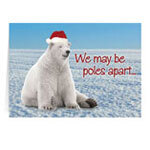 Polar Bear Christmas Card - Set of 20