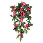 Impatiens Hanging Stem by OakRidge™
