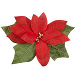 Giant Poinsettia