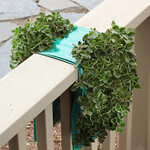 Organic Hanging Oregano Garden Kit