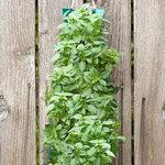 Organic Hanging Basil Garden Kit