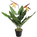 Bird of Paradise Flower in Pot by OakRidge™