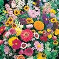 Instant Roll Out Flower Garden