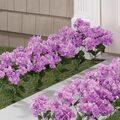 Artificial Light Purple Hydrangeas