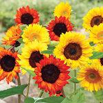 Sunflower Garden Mat